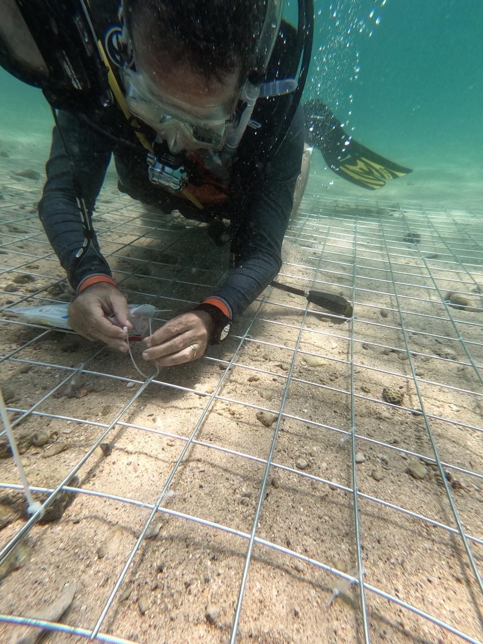 بيئة الشارقة تطلق مشروعاً لاستزراع الشعاب المرجانية في محمية جزيرة صير بونعير